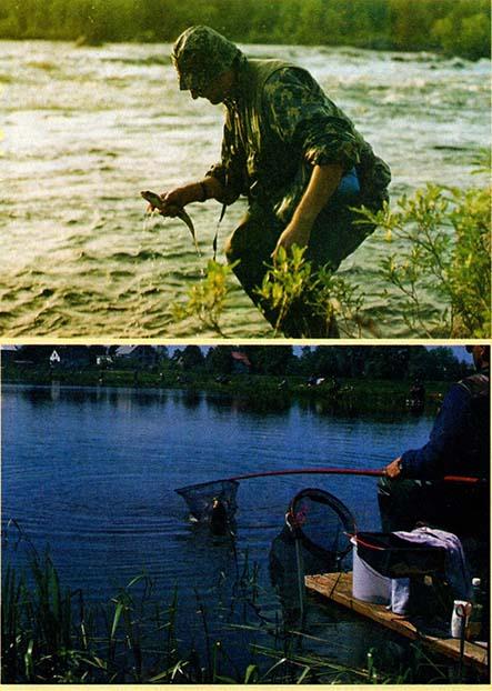 Ciśnienie, temperatura a ryby
