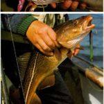 Wędkarstwo morskie dla szczurów lądowych